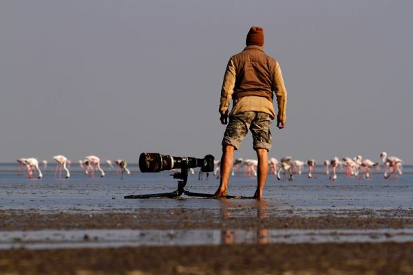 Flamingos and Wildlife photographer  Sudhir Shivaram