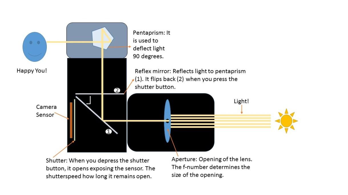 Illustration of how DSLR camera works