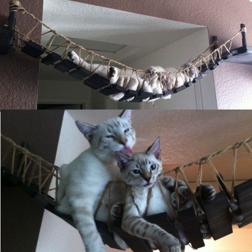 Indiana Jones Cat Bridge  Shut Up And Take My Money
