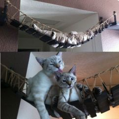 Cool Desk Chair Covers For You Indiana Jones Cat Bridge | Shut Up And Take My Money