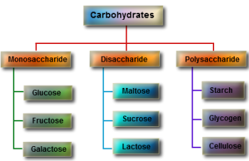 structure-of-carbohydrates