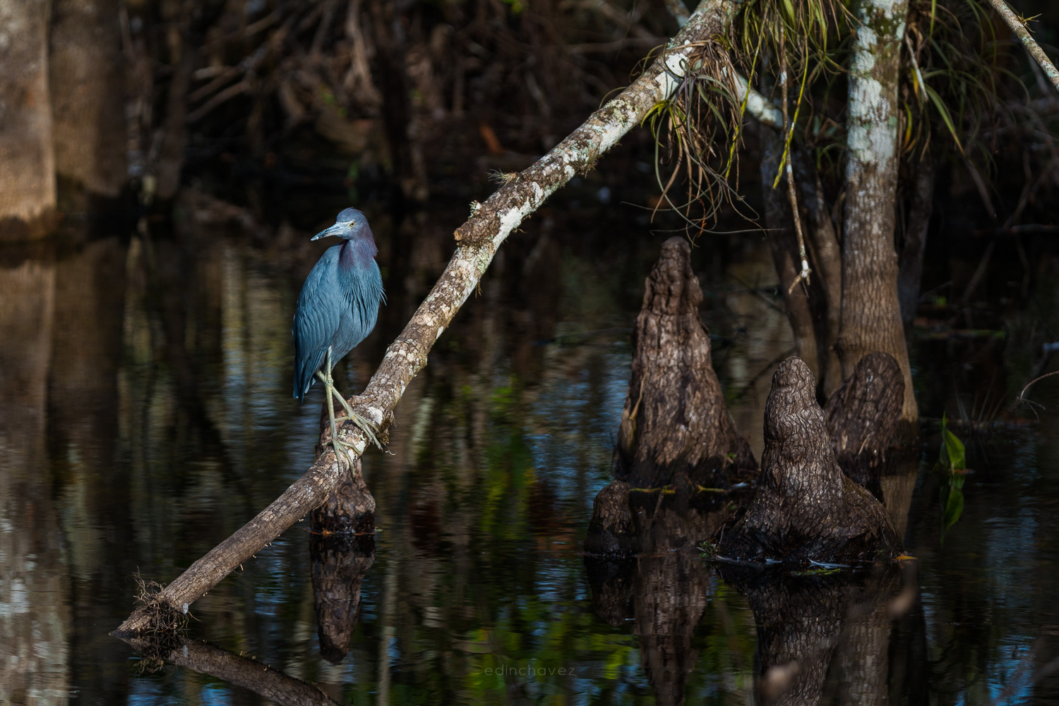 Tips and Tricks for Wildlife Photography
