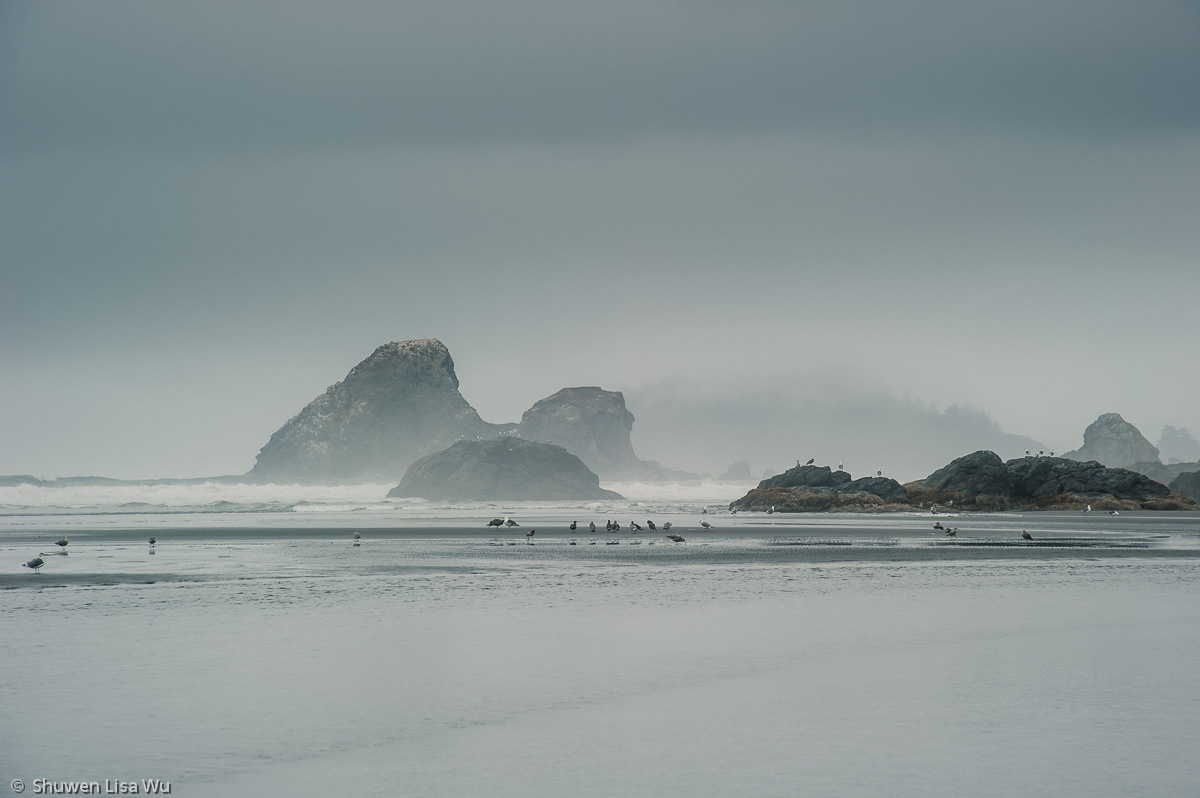 Photo of a foggy morning at Moonstone Beach, Trinidad