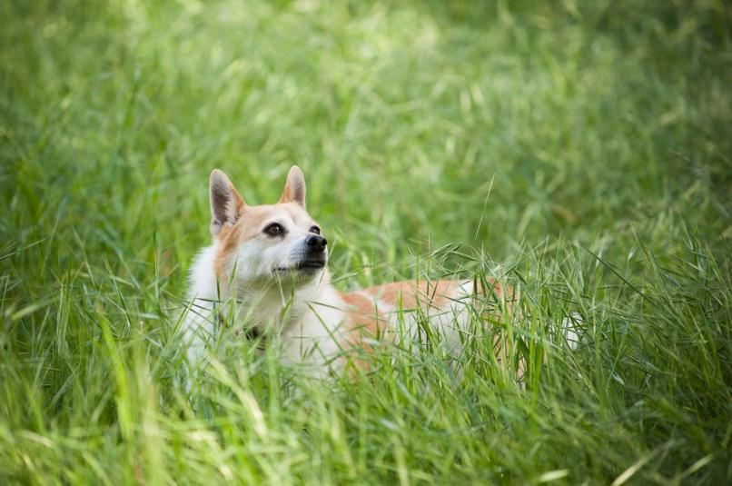 Toni in the high fresh green grass