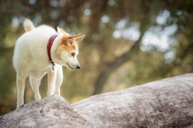 Toni climbing on a fallen tree