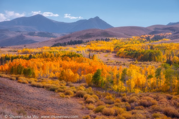 Dunderberg Meadows Fall Colors