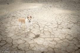 Dog at Clark Dry Lake