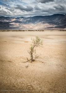 Clark Dry Lake