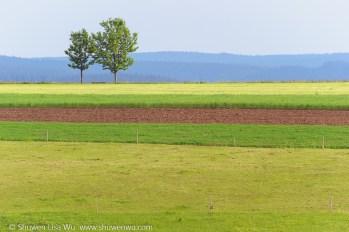 Striped Landscape -- near St. Peter, Black Forest region, Germany. June 2014.