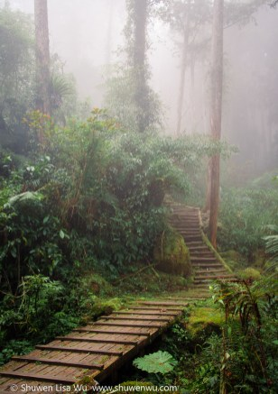 Taiwan Forest Trail