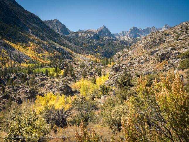 Fall Colors in Bishop Canyon, Bishop, California, September 2016.