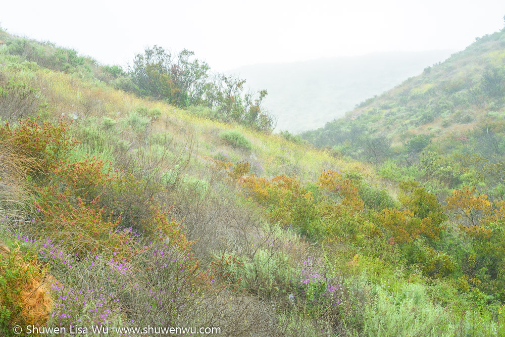 Hills with wildflowers at the Santa Margarita Ecological Reserve in Riverside County, California.