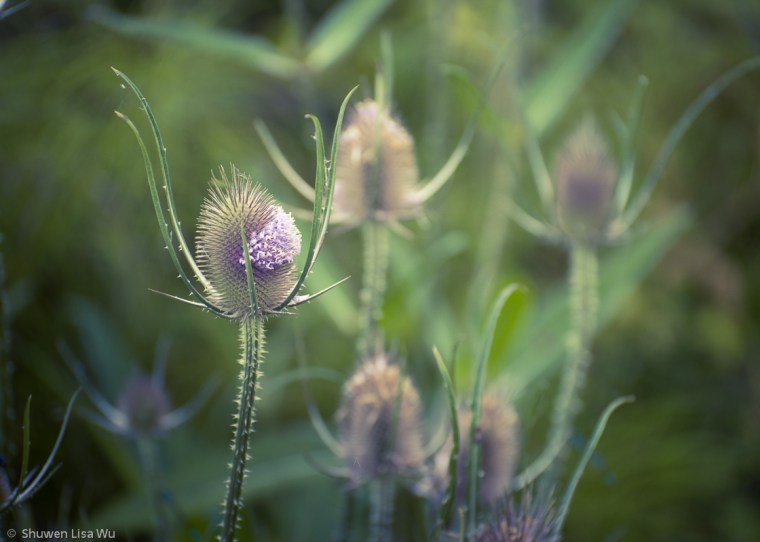Photo of Wildflowers at Arcata Marshes