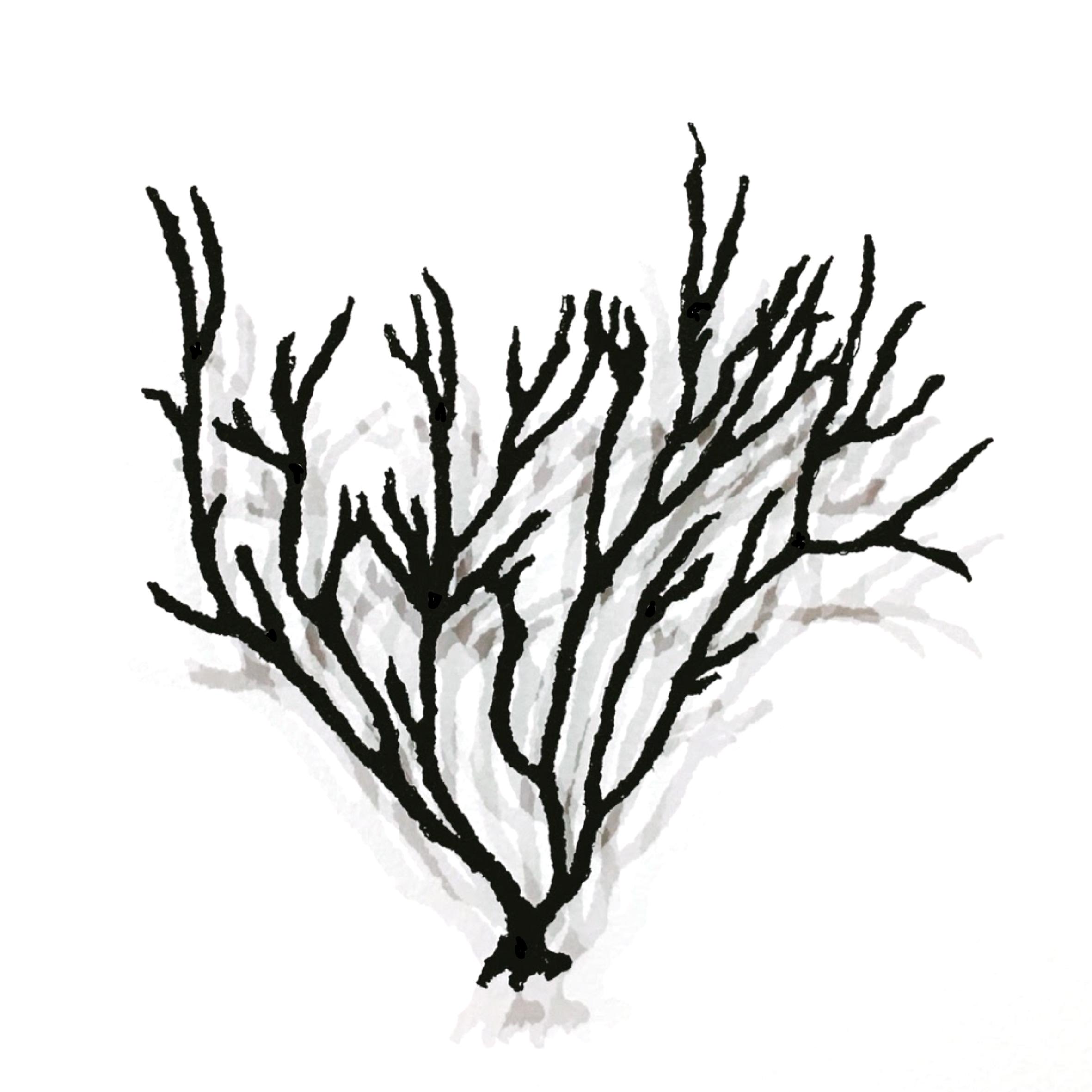 Seaweed #3