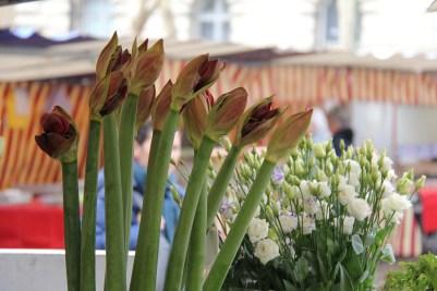 פרחים, פה לא בעשרה שקלים לזר