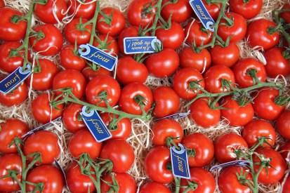 עגבניות, מכל הסוגים ומכל המינים