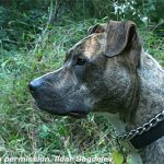 A Guide to Hunting Dog Safety