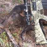Three Times the Fun: Hogs, Deer and Coyote Fall to the Remington R-25 in .243 Winchester