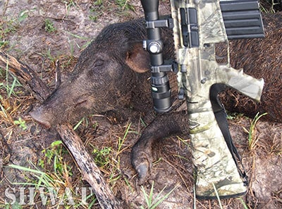 .243 for Hog Hunting