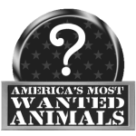 America's Most Wanted… Animals
