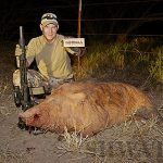 Gorillas Chasing Hogs – The Holy Grail of Hog Hunting? Gorilla Ammunition 208 Grain Subsonic Results