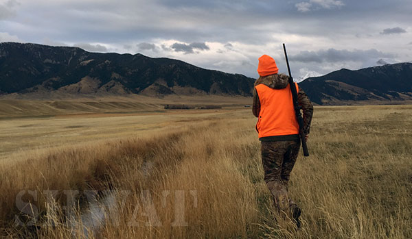 hunting-elk-in-montana