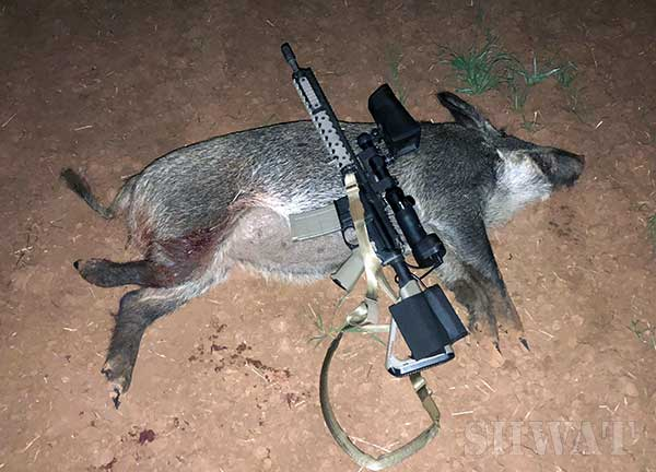 Hog Hunting with NiteSite Eagle
