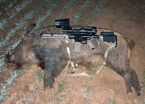 Nitesite hog hunting review