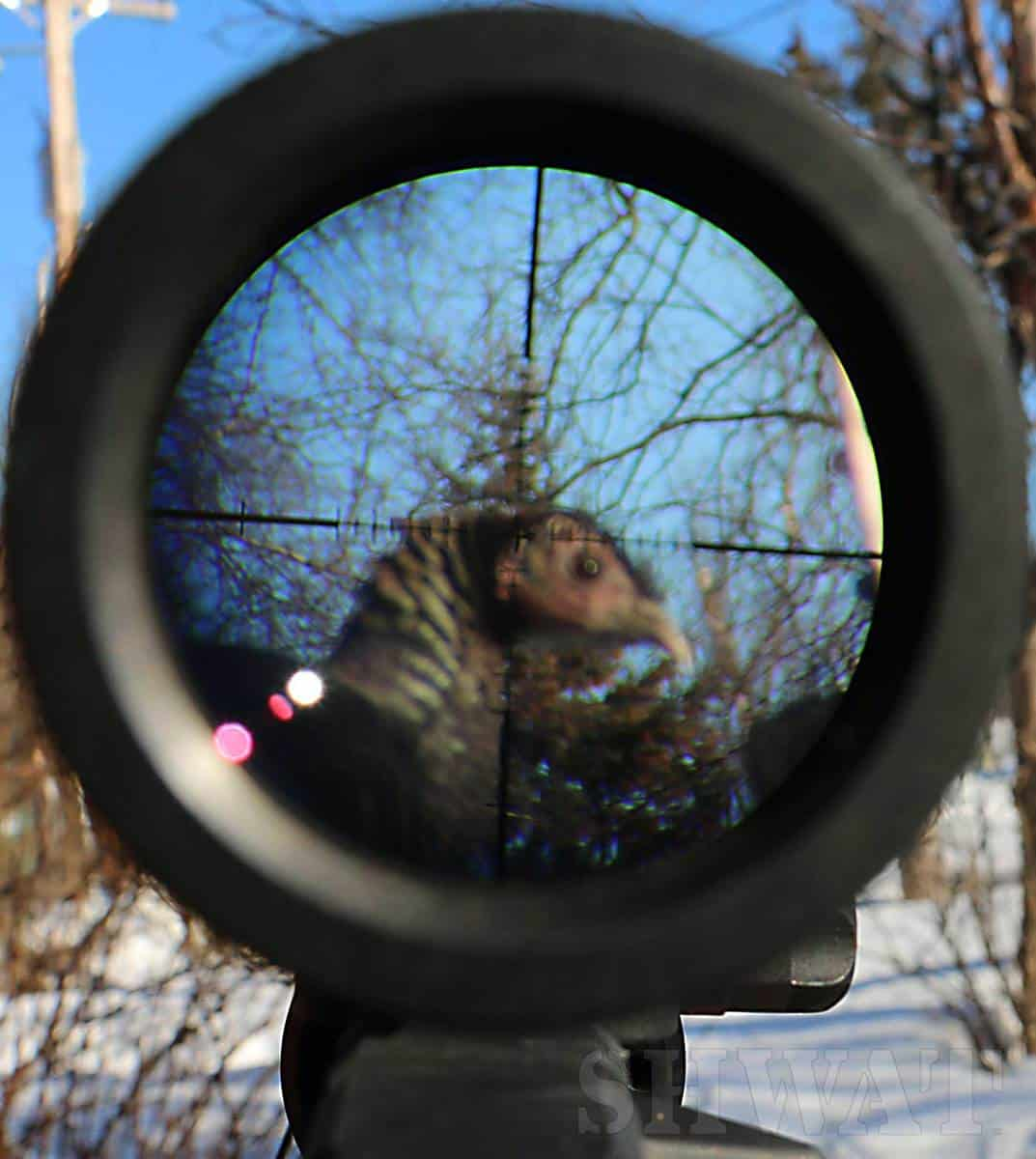 Using magnified optics hunting