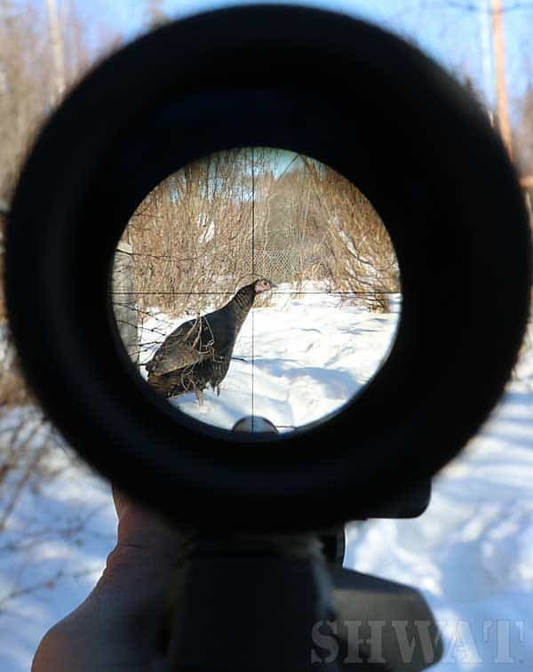 Hunting with magnified optic