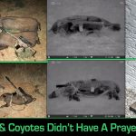 Ten Hogs, Three Coyotes, One Night Solo Hunting with the Alexander Arms 6.5 Grendel and Pulsar Thermal Scope