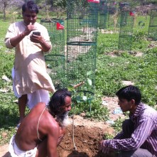 Tree guards devaki planting
