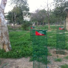 tree guards group