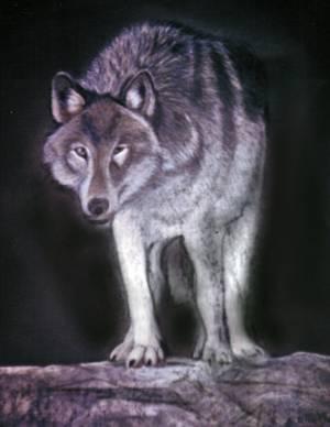 Mountainwolf