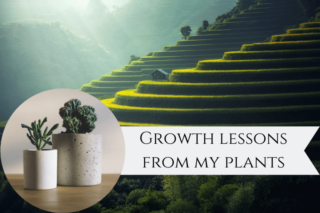 Featured Image - Growth Lessons from Plants