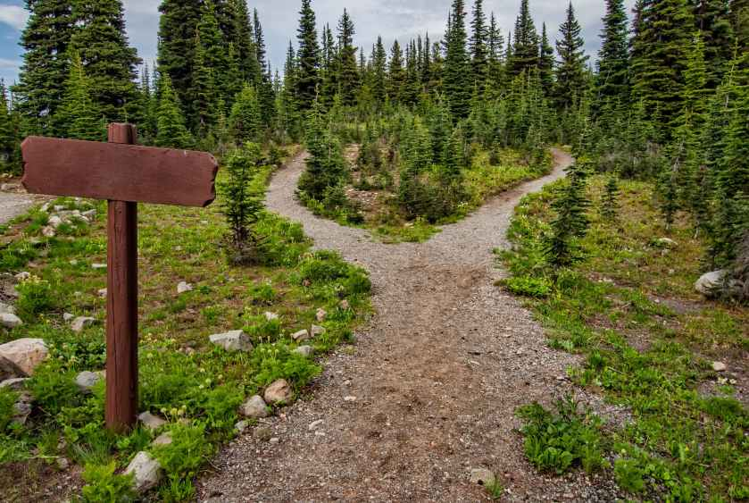 photo of pathway surrounded by fir trees