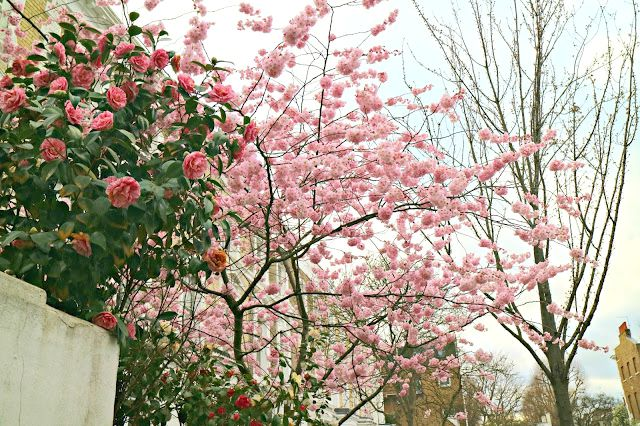 pink blooms to be found on london walks