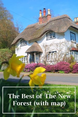 The Best of The New Forest Pinterest pin