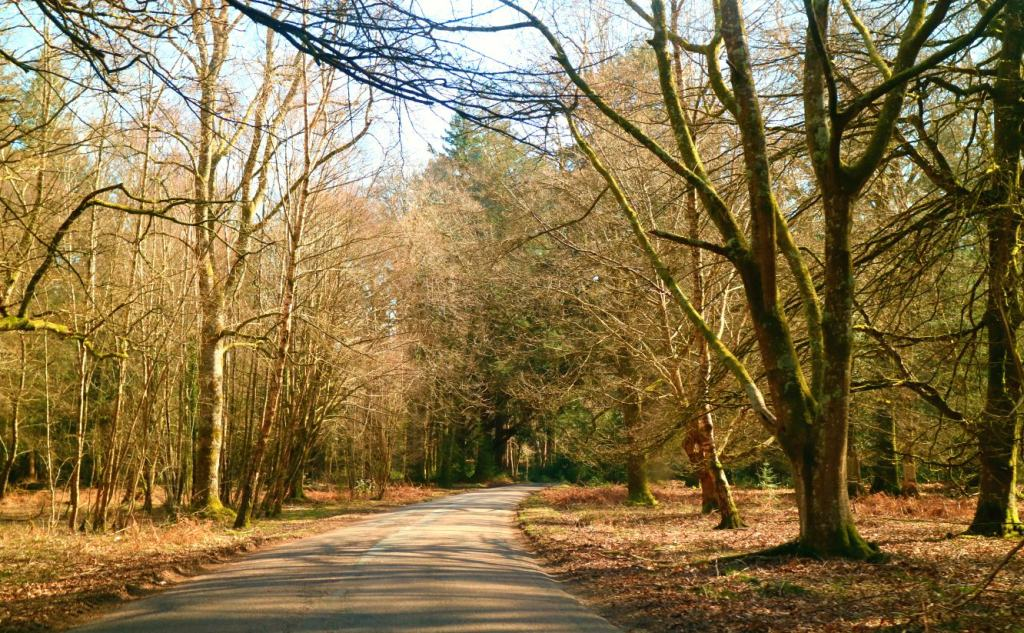 Driving view of Rhinefield Ornamental Drive in The New Forest