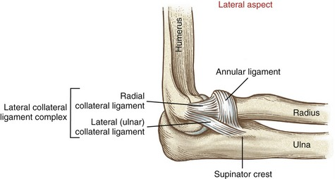 Image result for Annular ligament, radial and ulnar collateral ligaments
