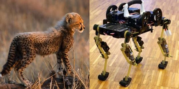 EPFL built a 'Cheetah-cub' with spring-loaded legs to mimic the gait of its namesake at a house cat's size.