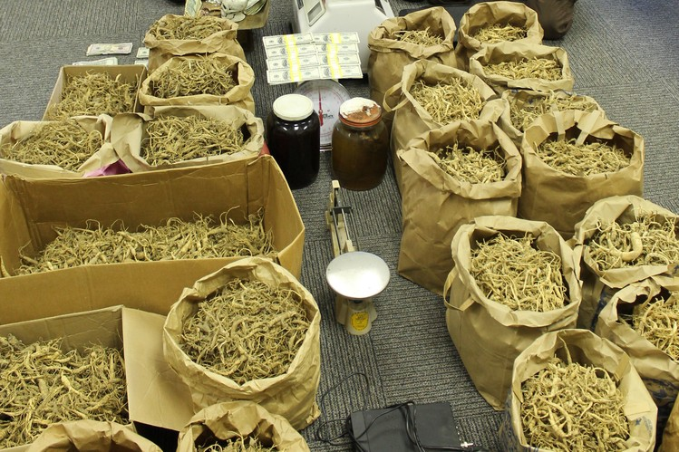 Image Result For How Much Does Wild Ginseng Sell For
