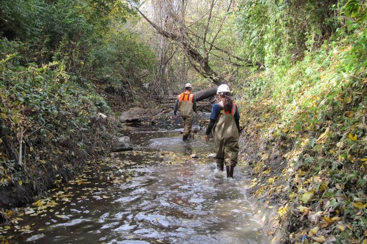 Coldwater Creek Radiation