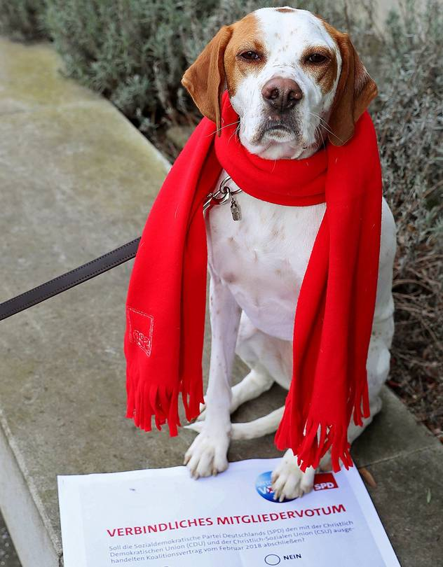 The Bild tabloid registered a dog, Lima, as a new SPD member eligible to vote, in a bid to show lax controls over a crucial rank-and-file vote.