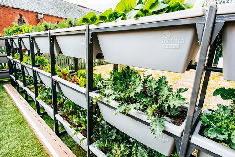 Biofilta's Foodwall system of connected containers requires minimal watering.