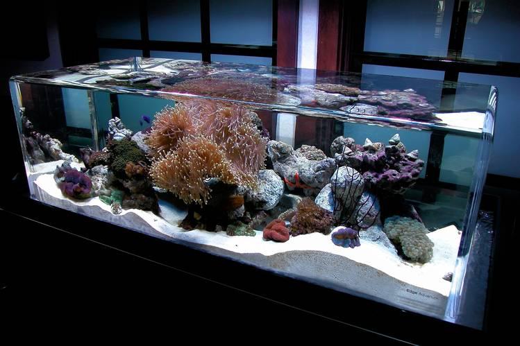 the 1 million aquarium customized fish tanks as home decor