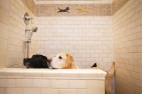 Reigning Cats & Dogs: High-End Pet Furniture -- WSJ ...