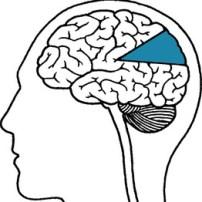 neuro-mitos en la mente