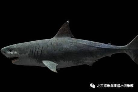 帶你了解已經滅絕的史前超COOL海洋古生物 - 每日頭條
