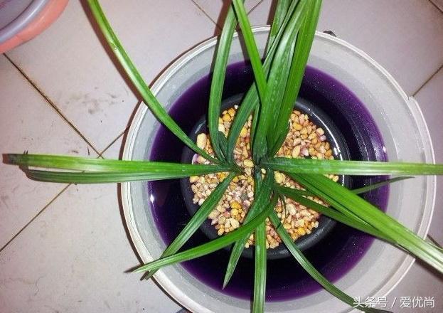 植物病蟲害高錳酸鉀護花神等藥劑如何使用? - 每日頭條